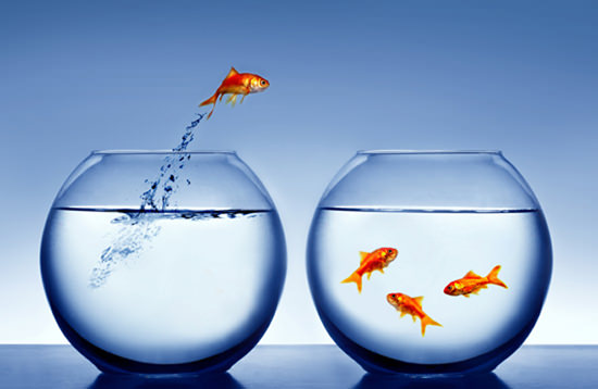 image of goldfish jumping out of the water